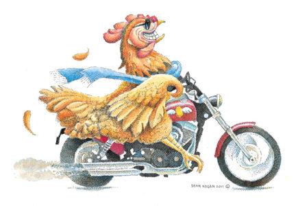Sean Hogan - Free Range Chicken