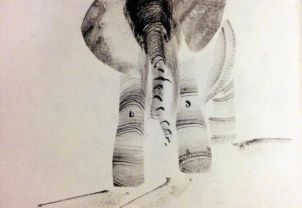 Naomi Chamberlain - For Boromoko the elephant