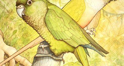 Richard Bowring - Illustration from book on evolutionary botany