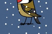 Joel Langlois - Illustrator - Garden Birds Xmas Goldfinch