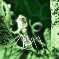 Jon Heras - Bacteriophage Virus
