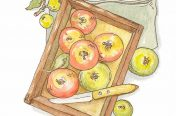 Marco Long – Apples Illustration