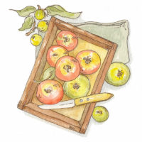 Marco Long – Apples Illustration