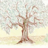 Marco Long – Olive Tree Sketch