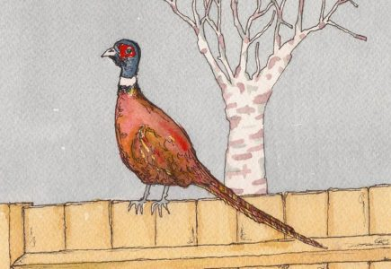 Marco Long – Pheasant On Our Fence
